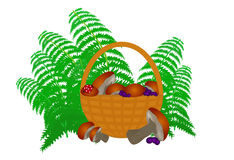 Vector a cesta completamente dos cogumelos com mirtilos e folhas da samambaia Imagem de Stock