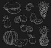 Vector chalk sketch icons of exotic fruits Royalty Free Stock Image