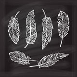 Vector chalk zendoodle feathers set. Royalty Free Stock Images