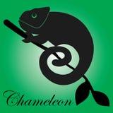 Vector chameleon. Chameleon logo on green background Stock Images