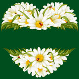 Vector chamomile frame in the shape of heart Stock Images