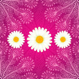 Vector chamomiles on pink ornate background. Vector chamomiles on pink ornate seamless background Stock Images