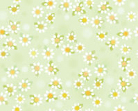 Vector chamomiles seamless pattern , soft, blurred effect. Stock Images