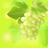 Vector champagne bottle, glass and grape on summer blur background. Created with gradient meshes. Stock Photography