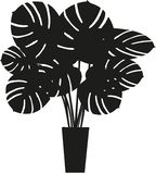 Cheese Plant Silhouette. Vector. Cheese Plant Silhouette in pot/planter. Monstera deliciosa. House or office plant. Indoor focal point stock illustration