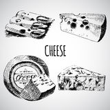 Vector cheese sketch drawing designer template. farm food collection. hand drawn dairy product Royalty Free Stock Photo