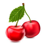 Vector cherries Royalty Free Stock Photo