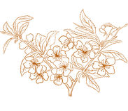 Vector cherry blossom. Vector cherry blossom in vintage engraving style Stock Photography