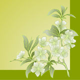 Vector cherry blossom. Vector illustration with cherry blossom for greeting card Stock Photo