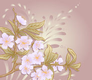 Vector cherry blossom. Vector illustration with cherry blossom for greeting card Royalty Free Stock Images