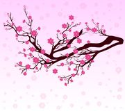 Vector Cherry blossom for Chinese New Year and lunar new year . Royalty Free Stock Images