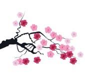 Vector cherry blossom Stock Photos