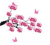 Vector Cherry Blossom Stock Photography