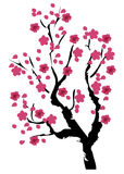 Vector Cherry Blossom Royalty Free Stock Image