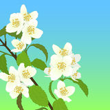 Vector cherry blossom. Royalty Free Stock Photo