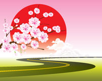 Vector cherry blossom and road Royalty Free Stock Images