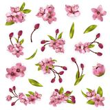 Vector cherry blossom tree elements for design. Pink flowers, green leaves and buds isolated on white background Royalty Free Stock Image