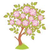 Vector Cherry blossoms Royalty Free Stock Photos
