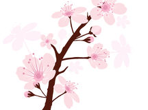 vector cherry branch Royalty Free Stock Image