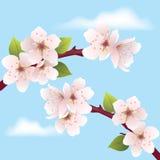 vector cherry branch Royalty Free Stock Photos