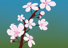 vector cherry branch with flowers Royalty Free Stock Image