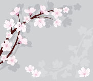 Vector cherry branch on gray background Royalty Free Stock Photos