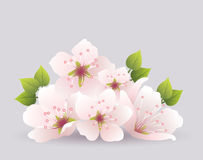 vector cherry flowers Royalty Free Stock Images