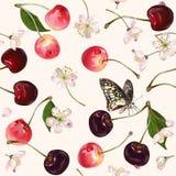 Vector cherry seamless pattern. royalty free illustration