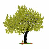 Vector cherry tree on white background Stock Photos