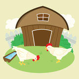 Vector Chicken Farm. Vector chickens were eating at the farm Royalty Free Illustration