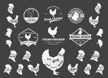 Vector Chicken Logo, Icons, Charts and Design Elements Royalty Free Stock Photo
