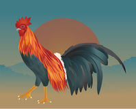 Vector of chicken on the morning Royalty Free Stock Photos