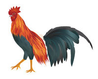 Vector of chicken Royalty Free Stock Image