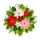 Christmas bouquet with poinsettia flowers, fir branches, holly and mistletoe. Vector illustration. Vector Christmas bouquet with red, pink and white poinsettia Stock Photography