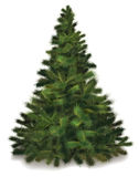 Vector Christmas pine tree Stock Image