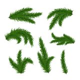 Christmas tree branches. Vector Christmas tree branches set  for decoration. Spruce branches of different shapes Stock Image