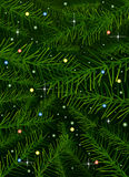 Vector Christmas tree pine branches background. Copy space Royalty Free Stock Images
