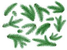 Vector christmas tree spruce branches set. Christmas, new year holiday spruce tree branches set. Festive Xmas winter celebration decoration, fir, christmas tree Royalty Free Stock Photo