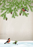 Vector Christmas Winter Landscape. With fir branches, birds bullfinches, cones Royalty Free Stock Photo