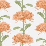 Vector chrysanthemum flower. Vector illustration seamless background with chrysanthemum Royalty Free Stock Image
