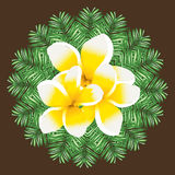 Vector circle of palm leaf and plumeria flowers. Stock Photography