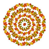 Vector circular pattern mandala  autumn leaves colored Stock Image