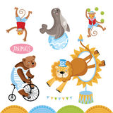 Vector Circus animals perform tricks. Stock Images