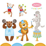 Vector Circus animals perform tricks. Isolated animals on a white background stock illustration