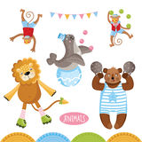 Vector Circus animals perform tricks. Isolated animals on a white background royalty free illustration