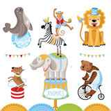 Vector Circus animals perform tricks. Isolated animals on a white background Royalty Free Stock Photos