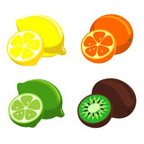 Vector citrus fruit Stock Photos