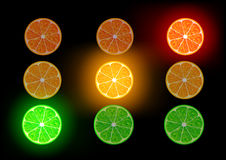 Vector citrus fruit Stock Image