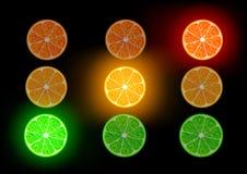 Vector citrus fruit Stock Image