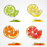 Vector citrus fruits Stock Photography